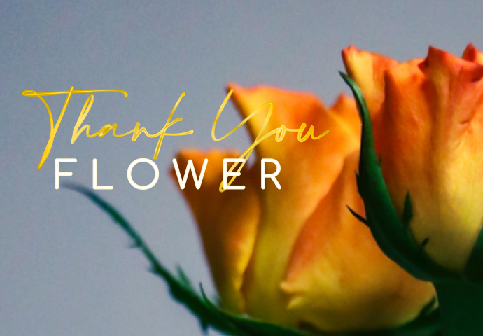 There's no better way to say thank you than with a beautiful bunch of fresh flowers . With our gorgeous collection of bouquets, you can send some sunshine today ! Whether you need to say thanks to a friend who's gone the extra mile for you, or a helpful relative, we have the perfect flowers for you to choose from. ​