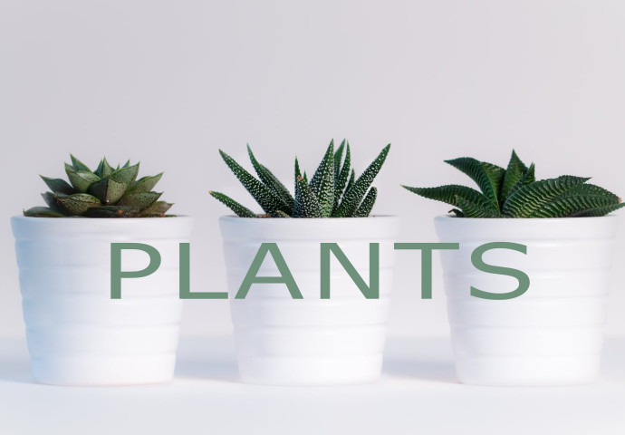 Carefully curated and cared for, our plants are locally sourced and you'll be sure to find something to fit in your home. We also carry a limited range of planters that will fit your chosen plant wonderfully. These gorgeous gifts will put a smile on your loved one's face.