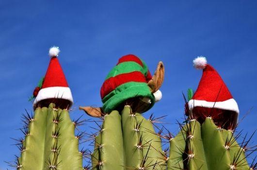 Christmas Cactus Christmas Banner