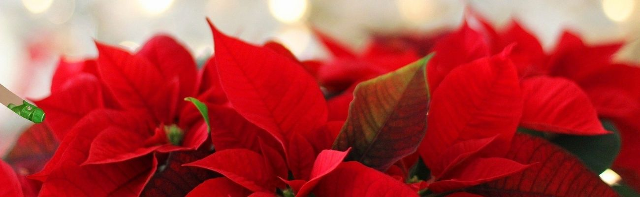 The best Christmas flower and decor trends 2020