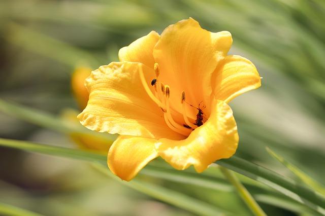 Freesias Popular Flower in UK Banner