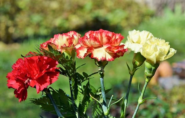 Carnation Popular Flower in UK Banner