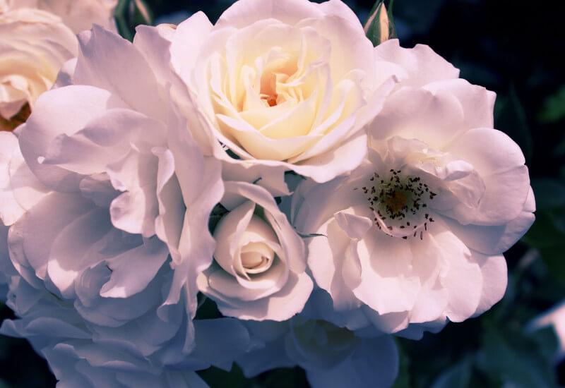 Gardenia : Mysterious Banner