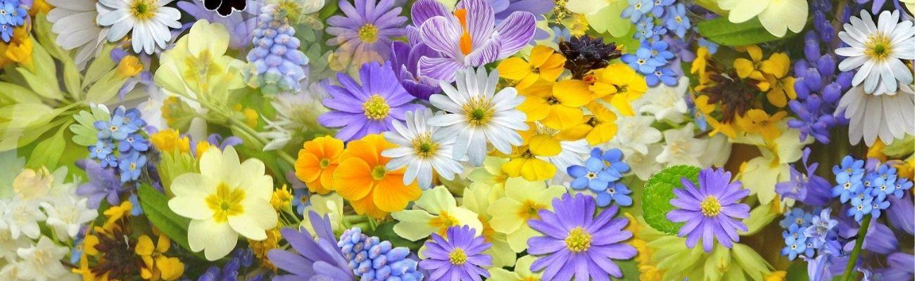 Blooms in Season: The Flowers of April