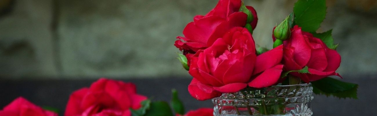 Red Rose: Symbolism and Meanings