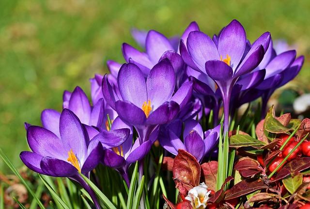 Violets Popular Flower in UK Banner