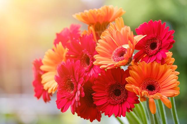 Gerberas Popular Flower in UK Banner
