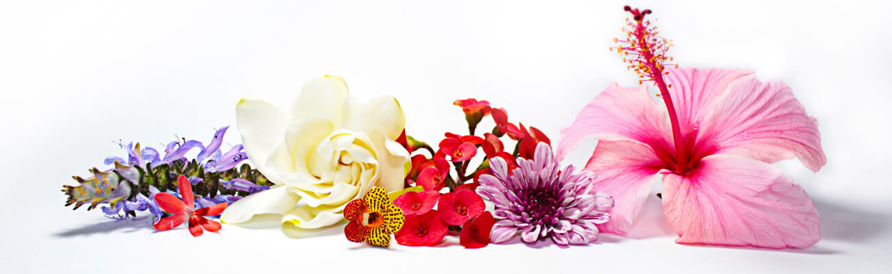 Essential Oil Flowers Banner