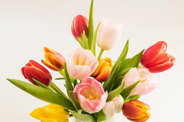 Tulips Popular Flower in UK Banner