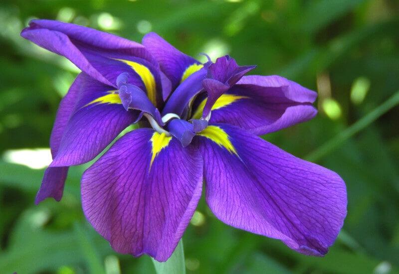 Irises : Loves Experience Banner