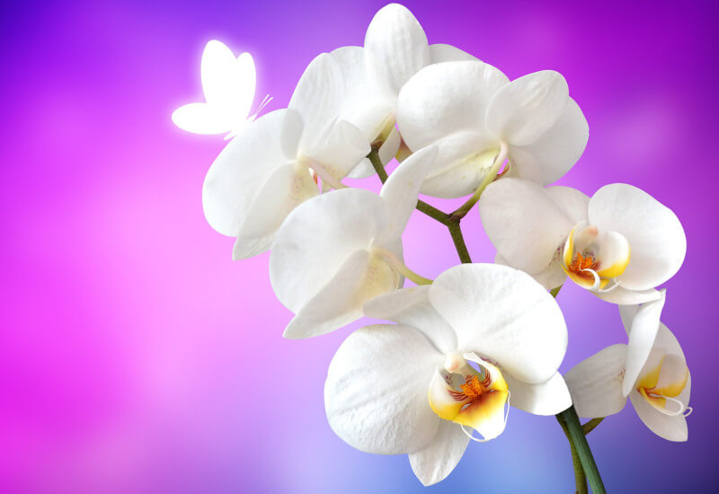 Orchids: Classy and Sophisticated Banner