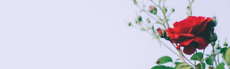 https://cdn.floristblooms.com/sites/183/content-location/938d0c48-0113-4315-a964-f8b04e1cc96b.png