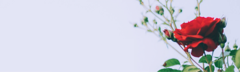 https://cdn.floristblooms.com/sites/238/content-location/4f689810-ac46-4cb4-9b75-f9a74de2a387.png