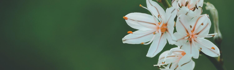 https://cdn.floristblooms.com/sites/335/content-location/fdb2b6bc-db54-4b1f-8109-8d08a690d8ac.jpg