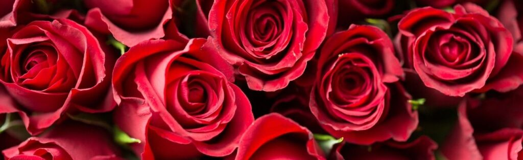 How to Get 100 Roses from a Flower Artisan