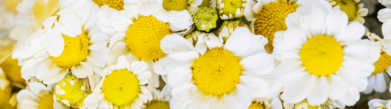 Brightside Florist is an established flower shop delivering beautiful flowers to Brightside. Order the same day before 1 pm from your local flower shop.